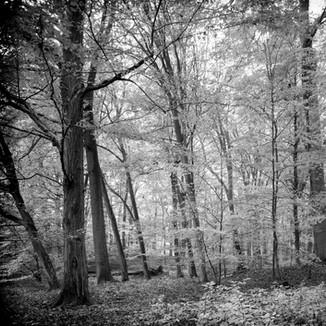 Buchenwald SW