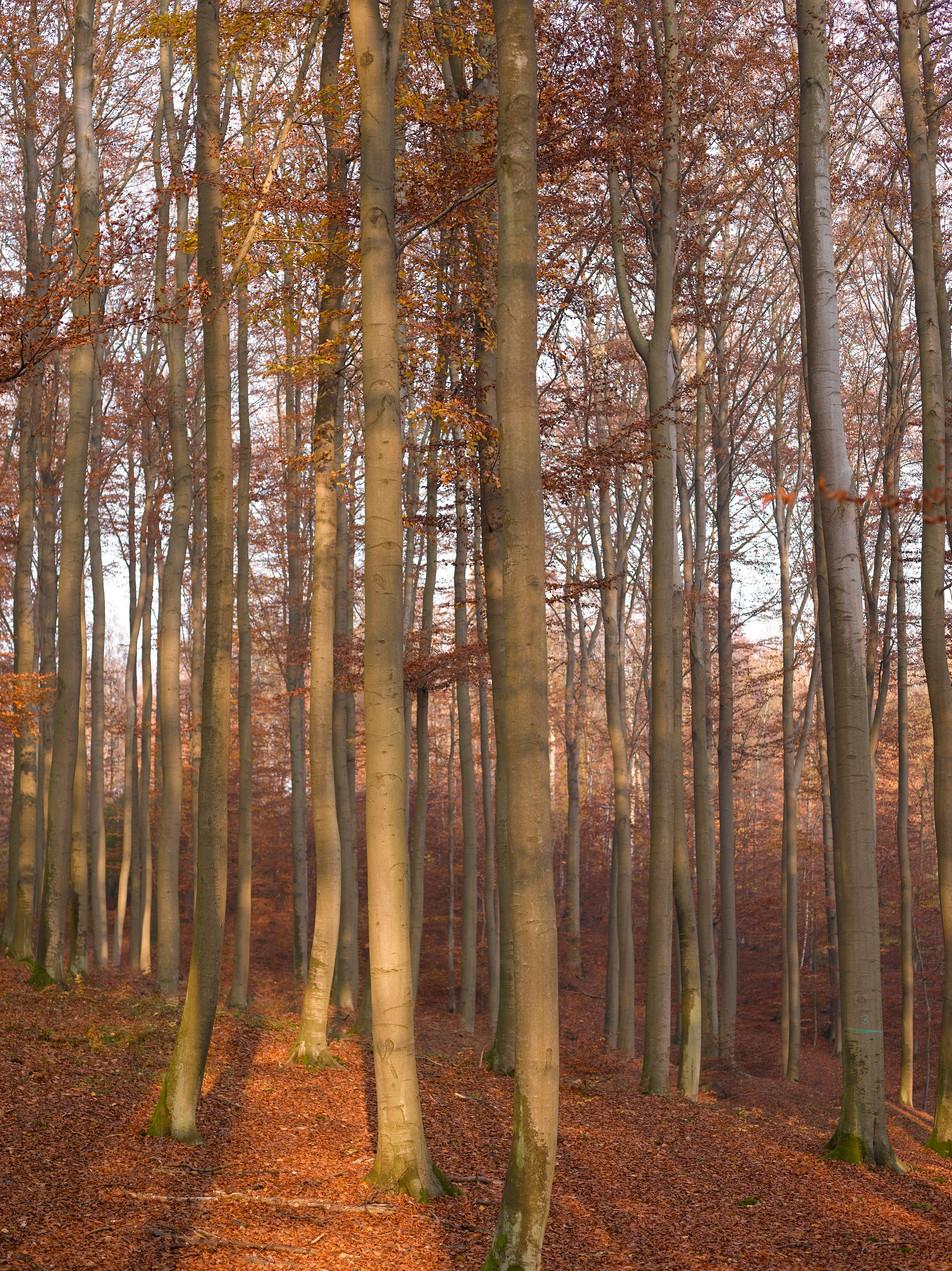 Herbstwald No. 07