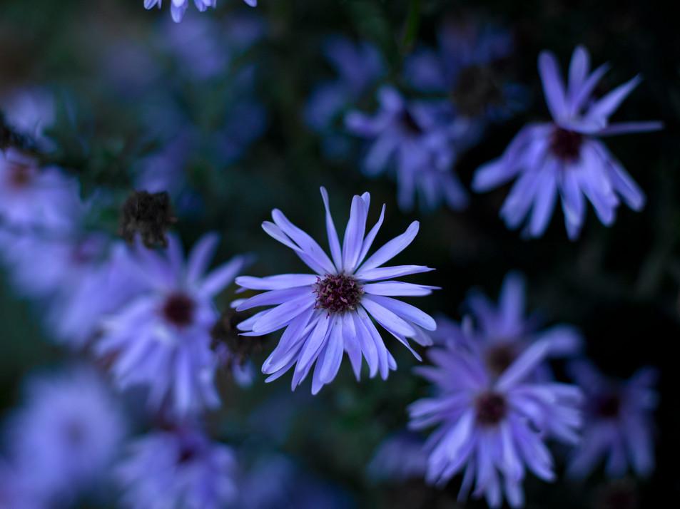 Flowers Blue No. 12