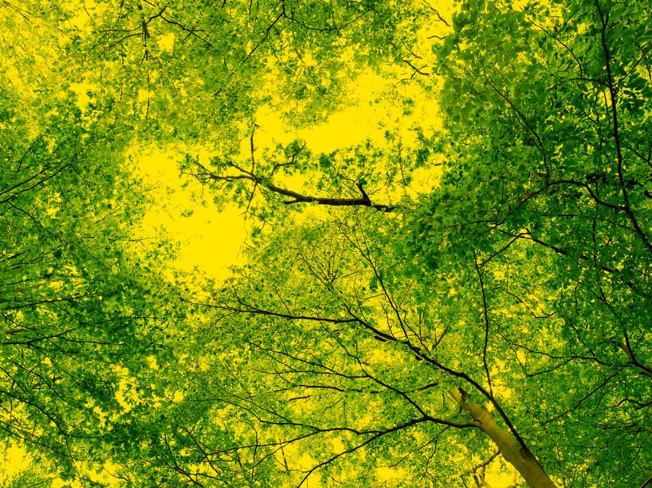 Blätterdach No. 01