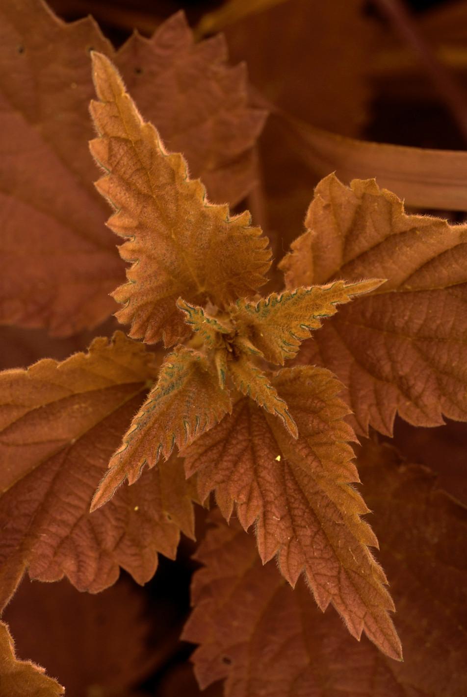 Blätter No. 15