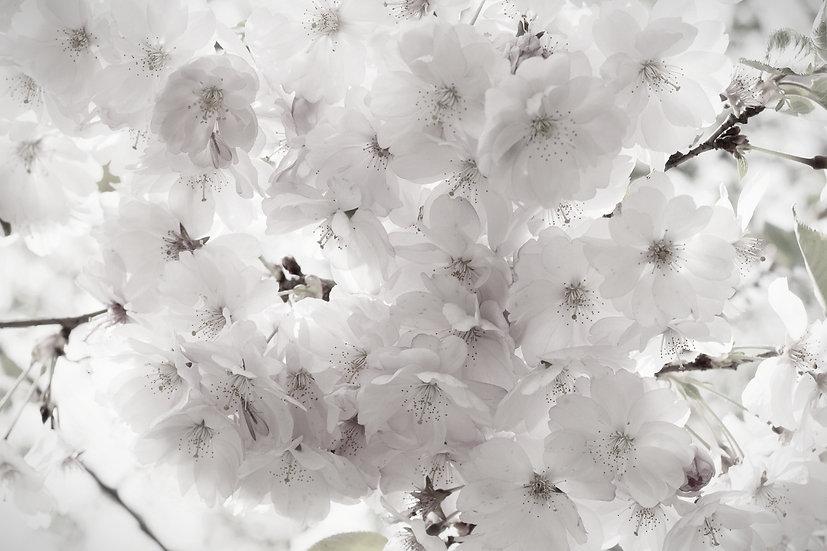 Baumblüten No. 07