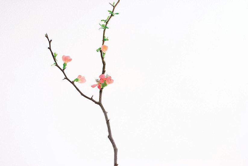 Baumblüten No. 31