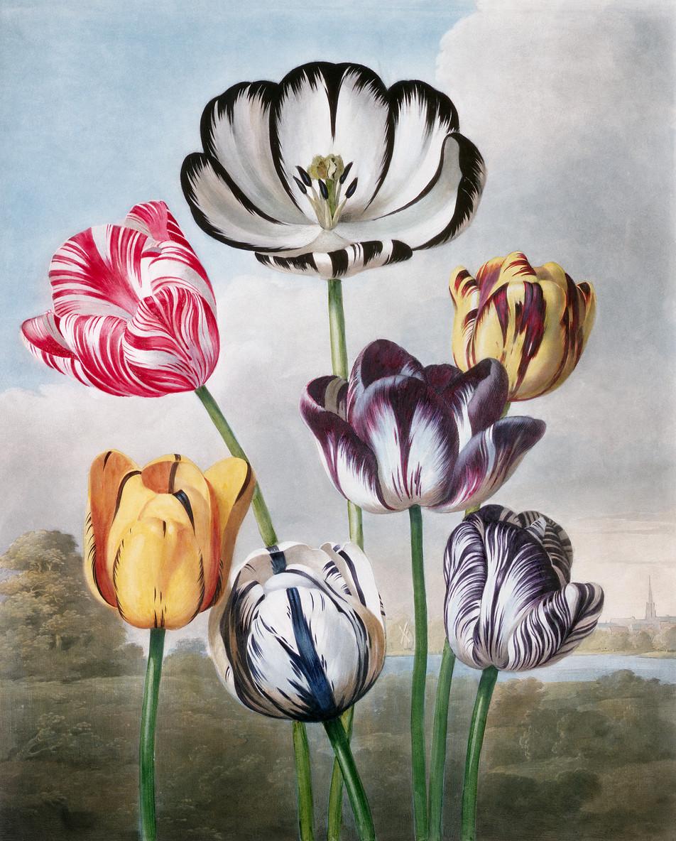 Blumen Illustration No. 02