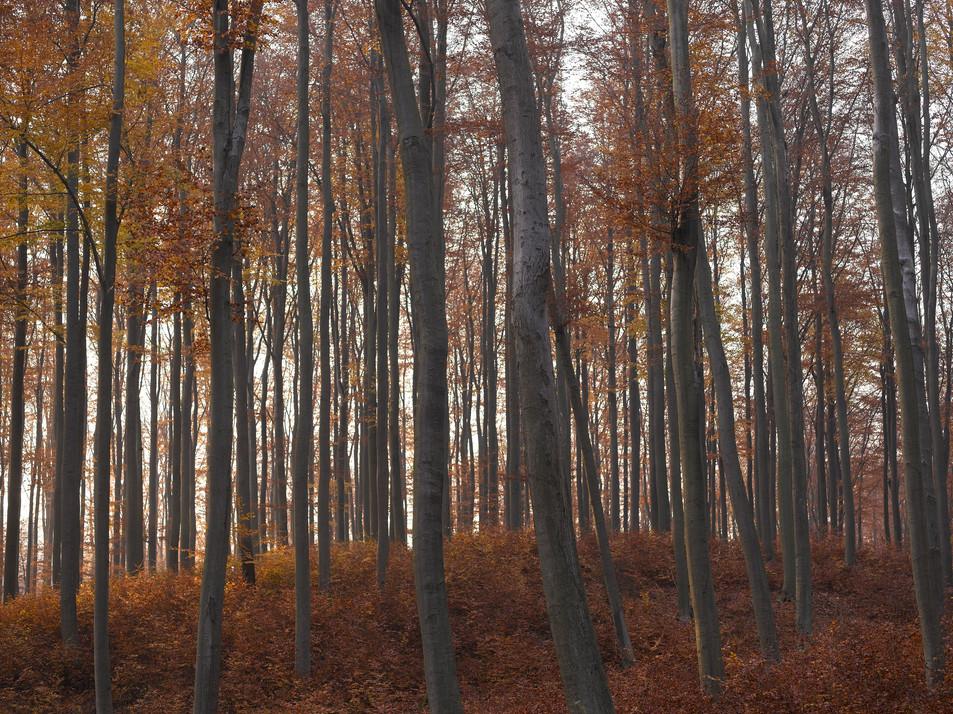 Herbstwald No. 12