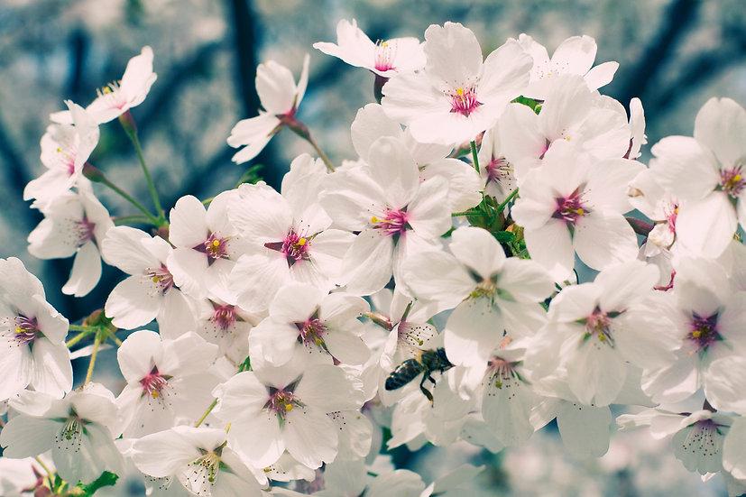 Baumblüten No. 09