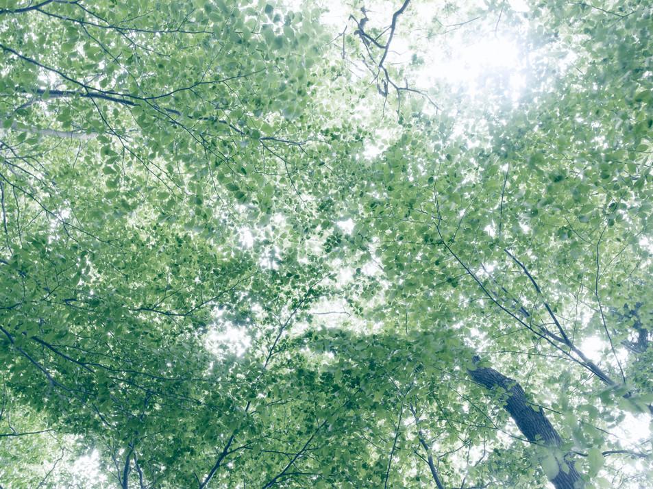 Blätterdach No. 04