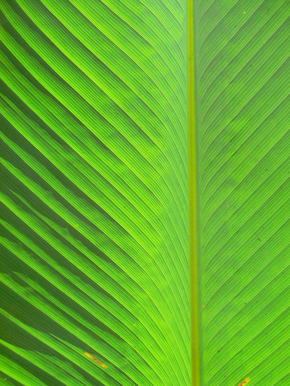 Blätter No. 13