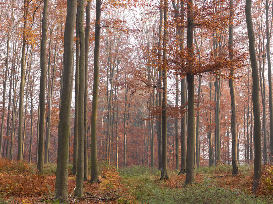 Herbstwald No. 02