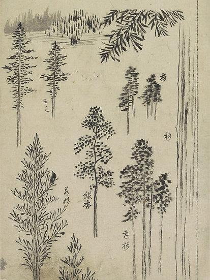 Asian Landscape No .01