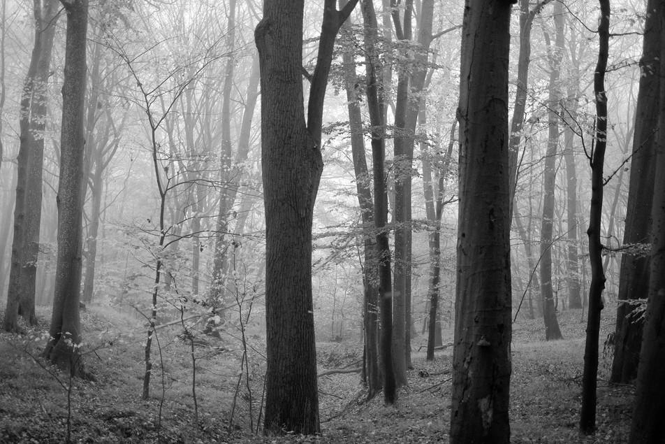 Tree to Light No. 06
