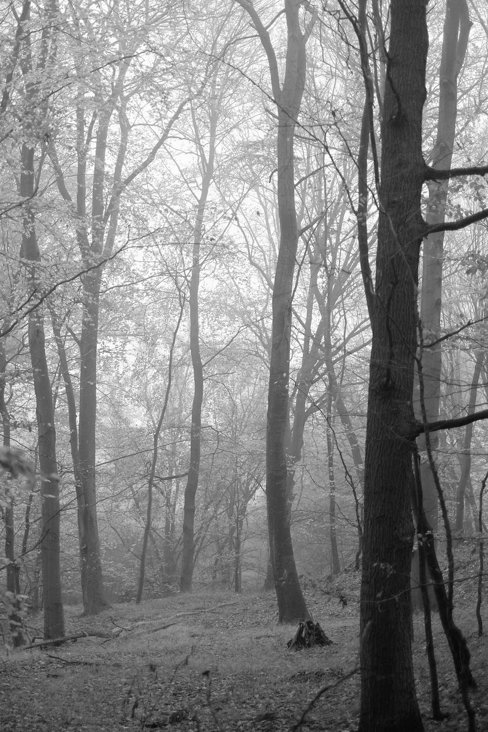 Tree to Light No. 07