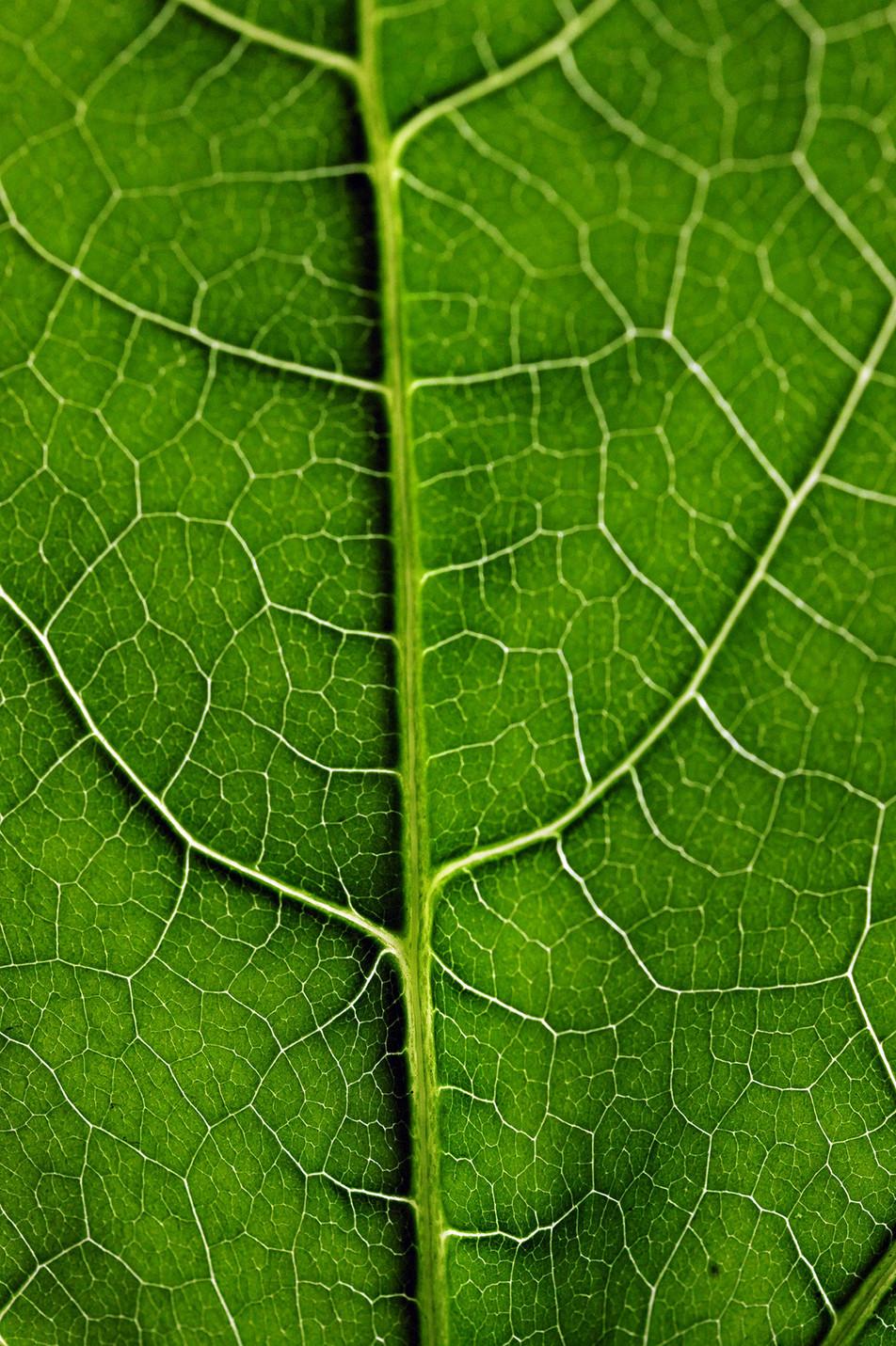 Blätter No. 03