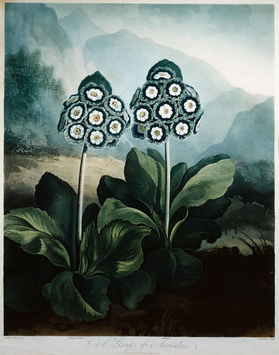 Blumen Illustration No. 11