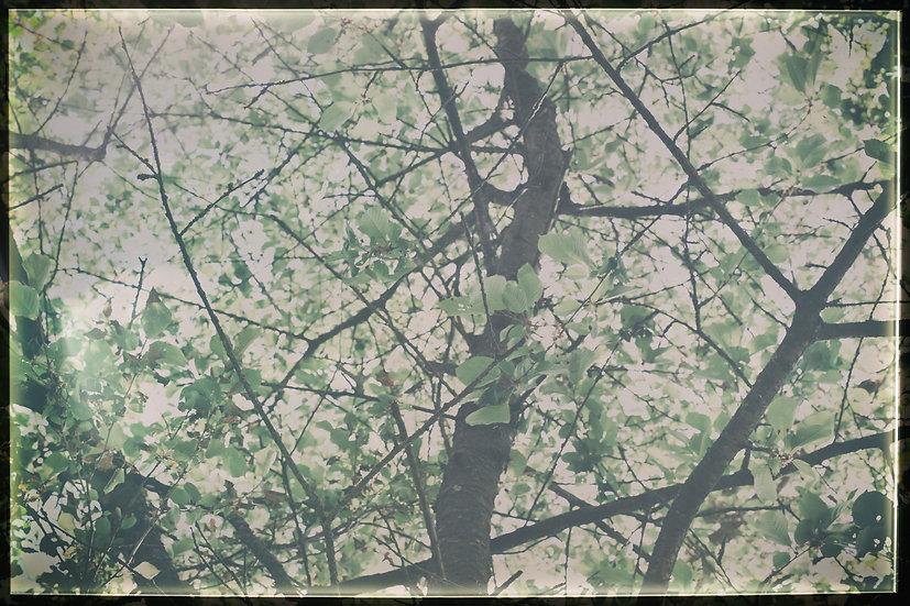 Blätterdach No. 11