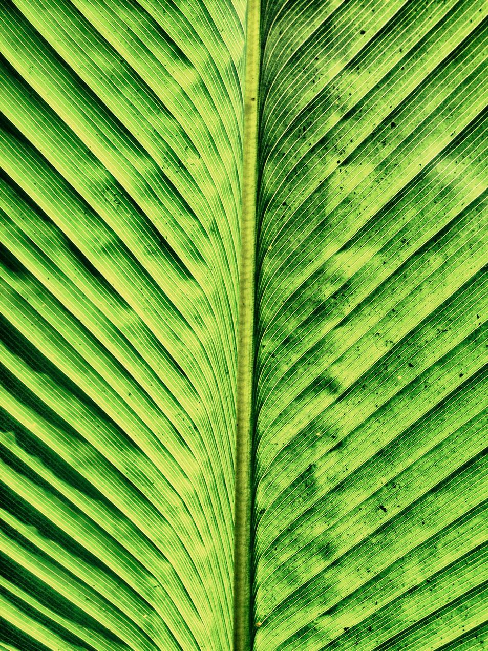 Blätter No. 09