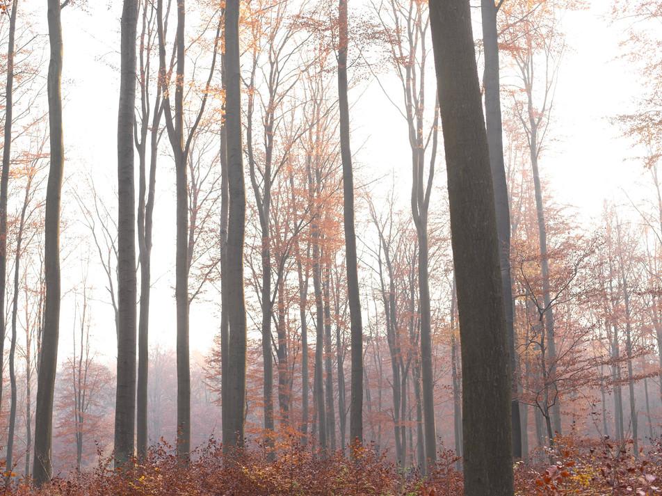 Herbstwald No. 05
