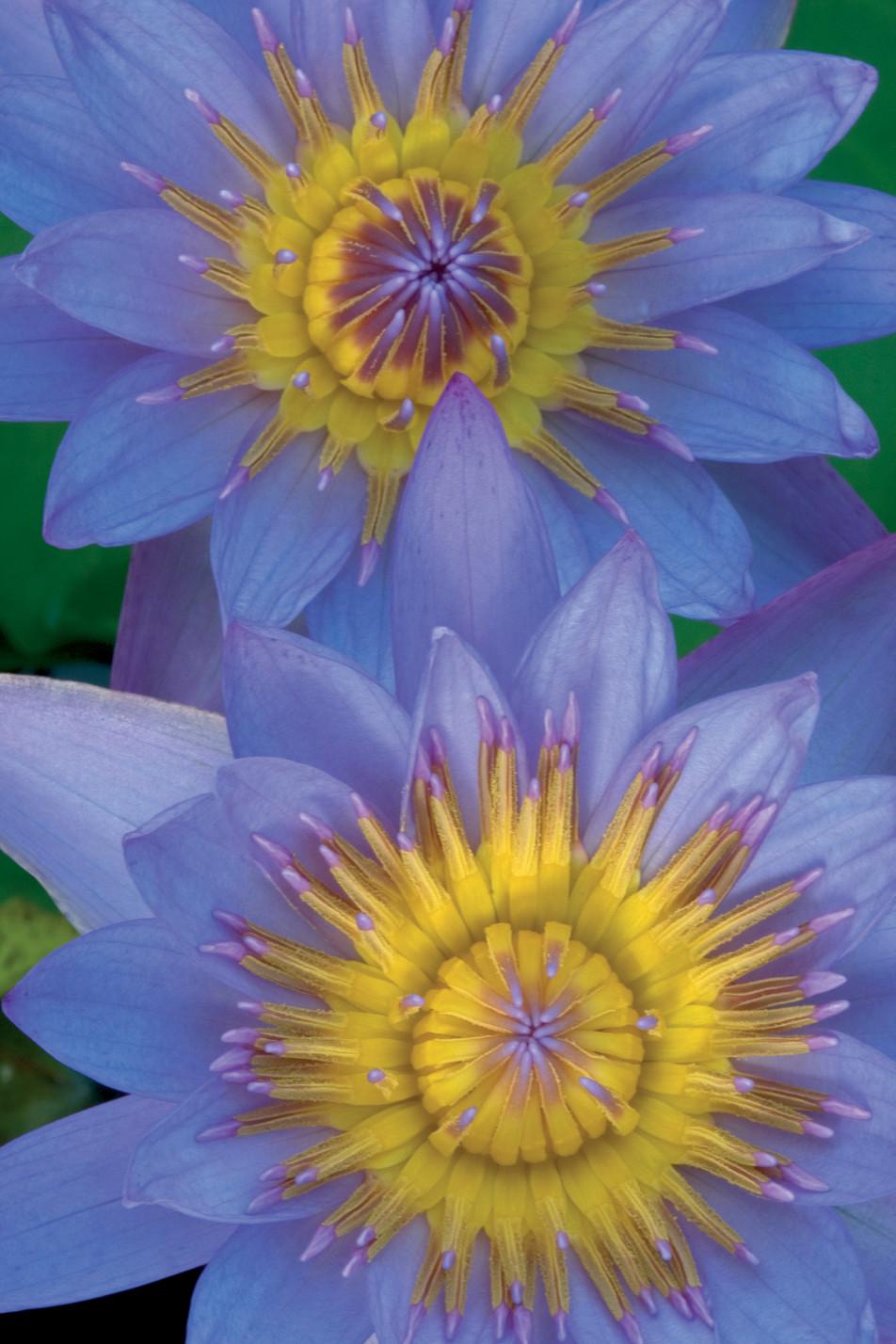 Flowers Blue No. 11