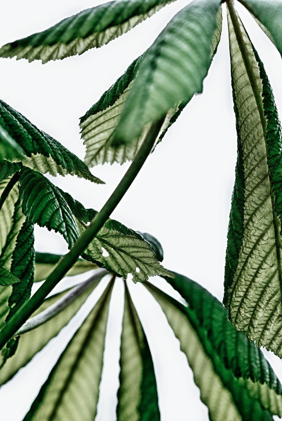Blätter No. 16