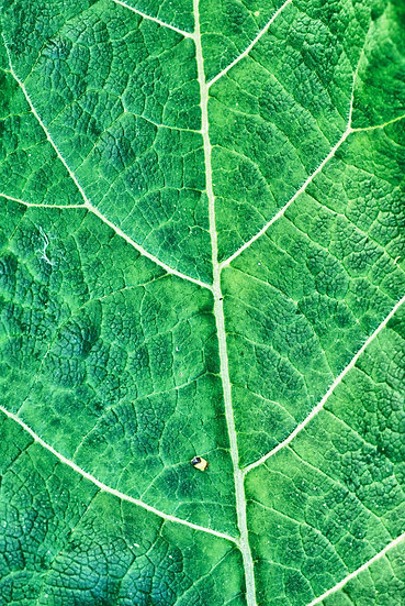 Blätter No. 19