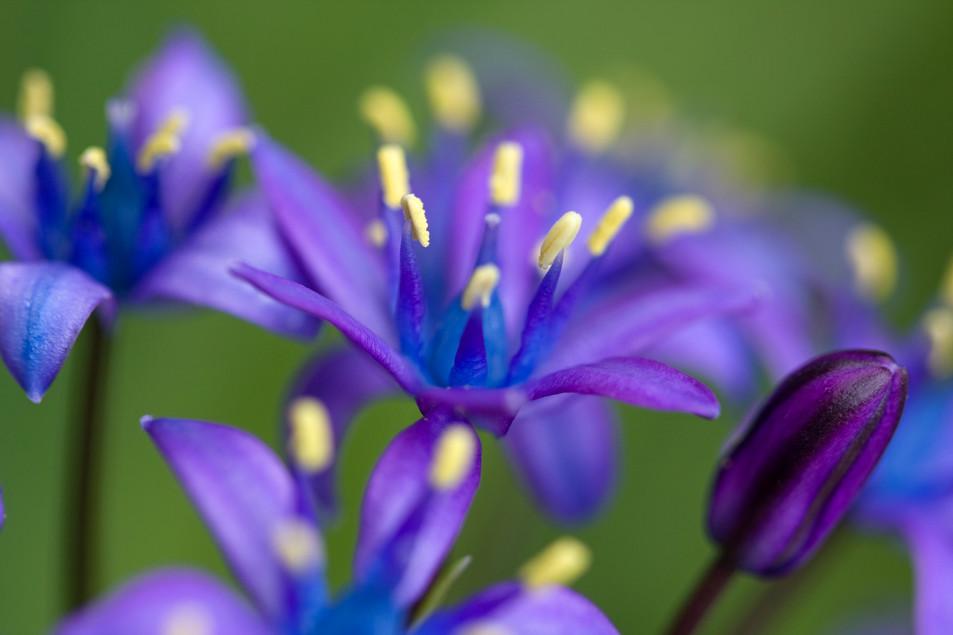 Flowers Blue No. 03