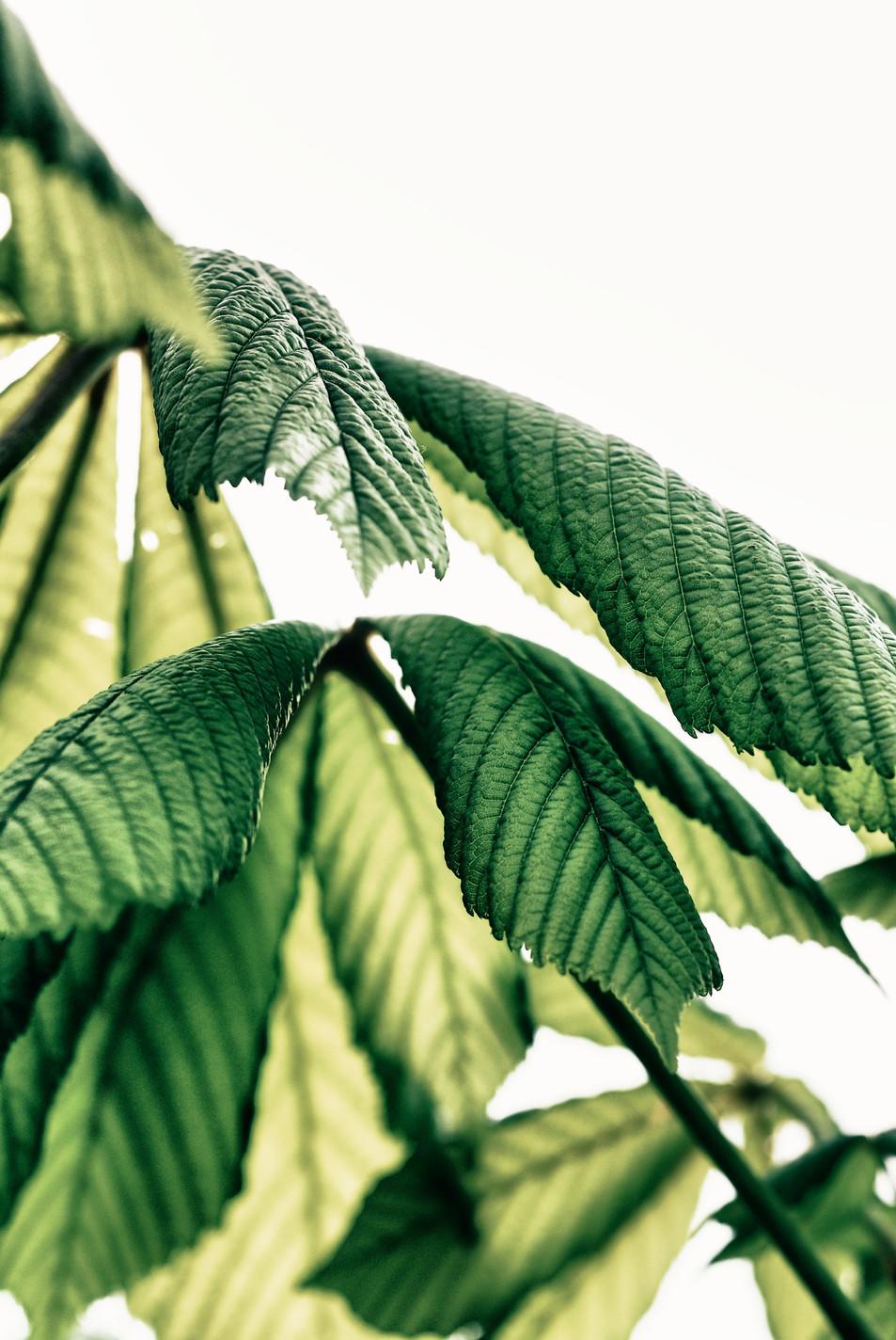 Blätter No. 11