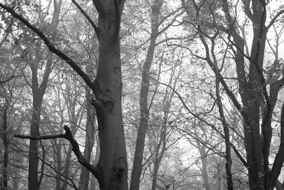 Tree to Light No. 10