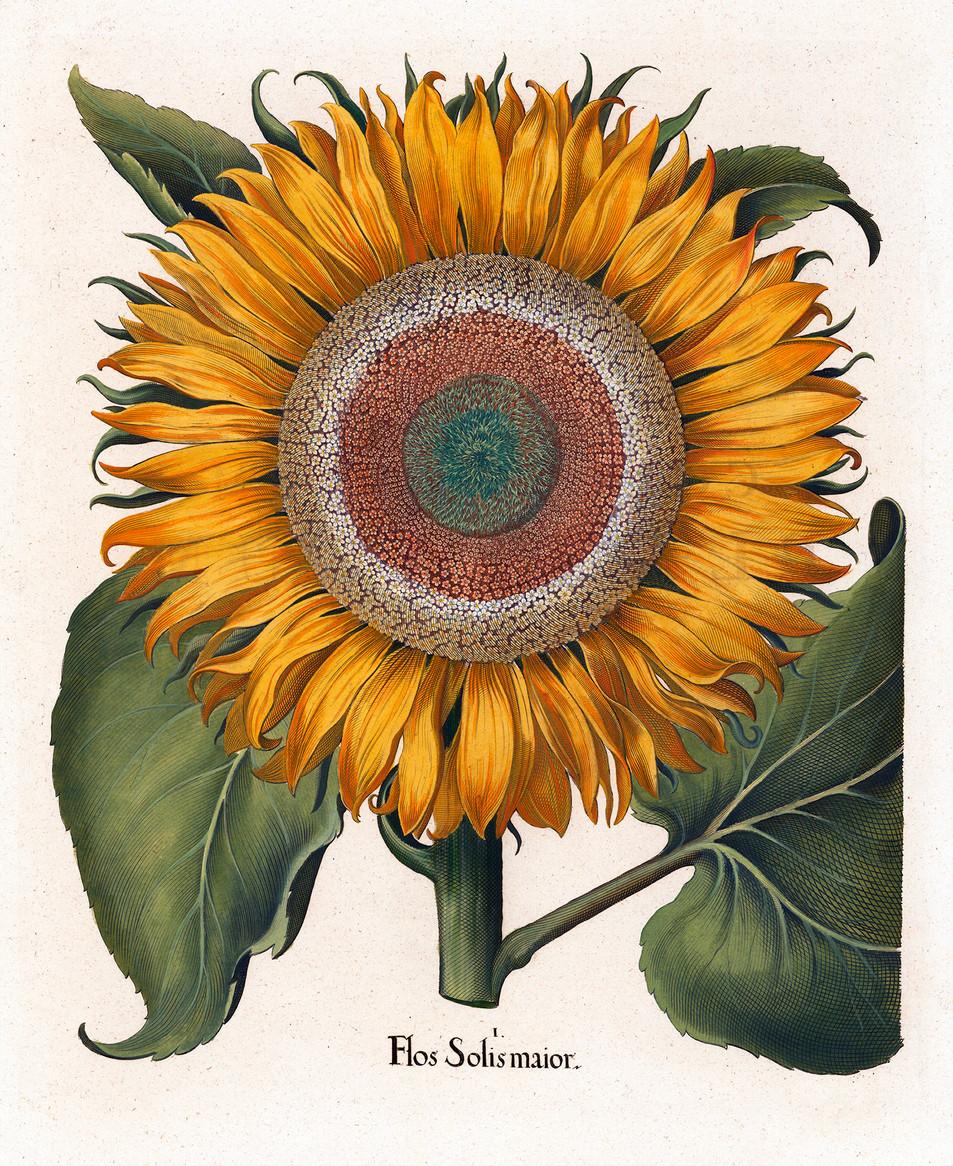 Blumen Illustration No. 12