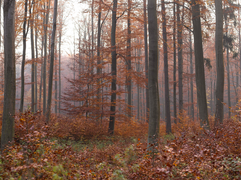 Herbstwald No. 11