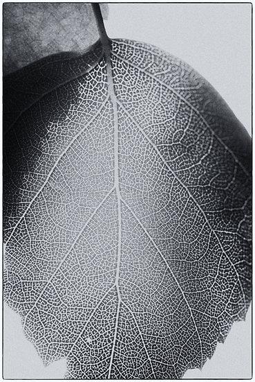 Blätter No. 14