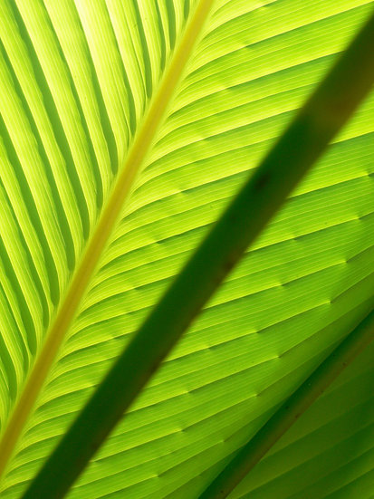 Blätter No. 12