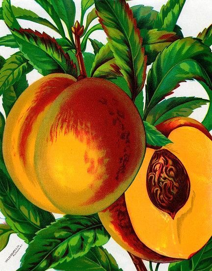 Blumen Illustration No. 10
