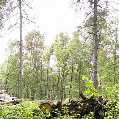 Waldpanoramen