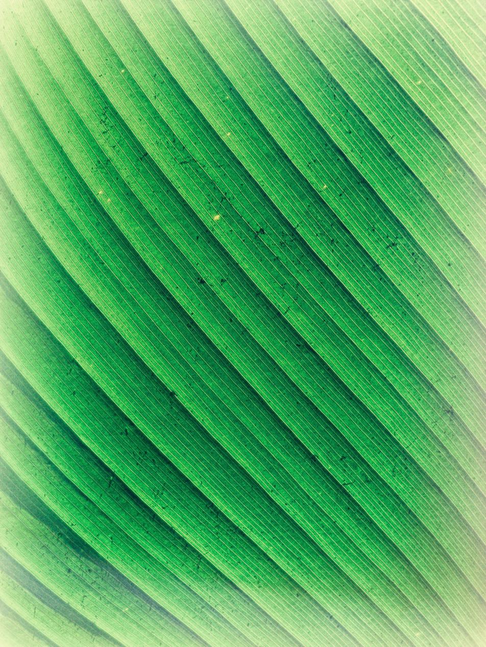 Blätter No. 10