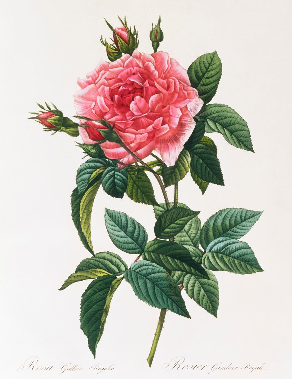 Blumen Illustration No. 05