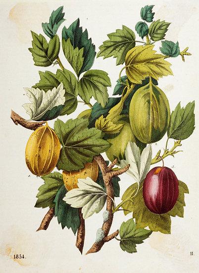Blumen Illustration No. 09