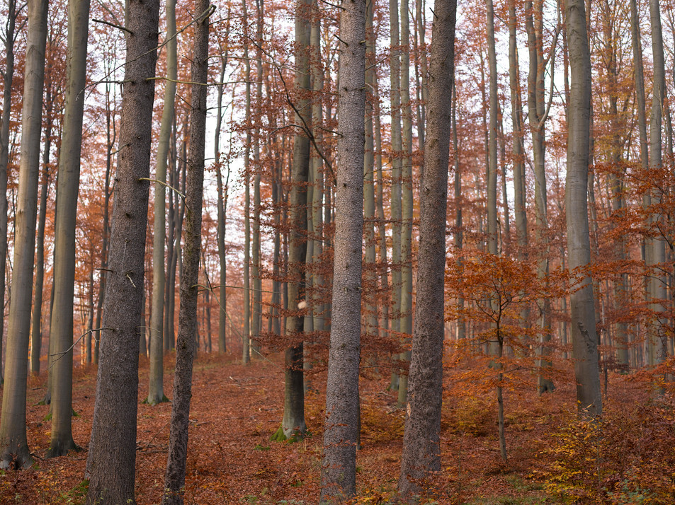 Herbstwald No. 06
