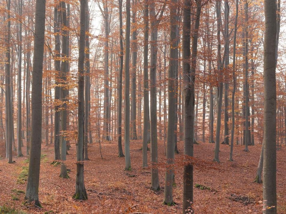 Herbstwald No. 01