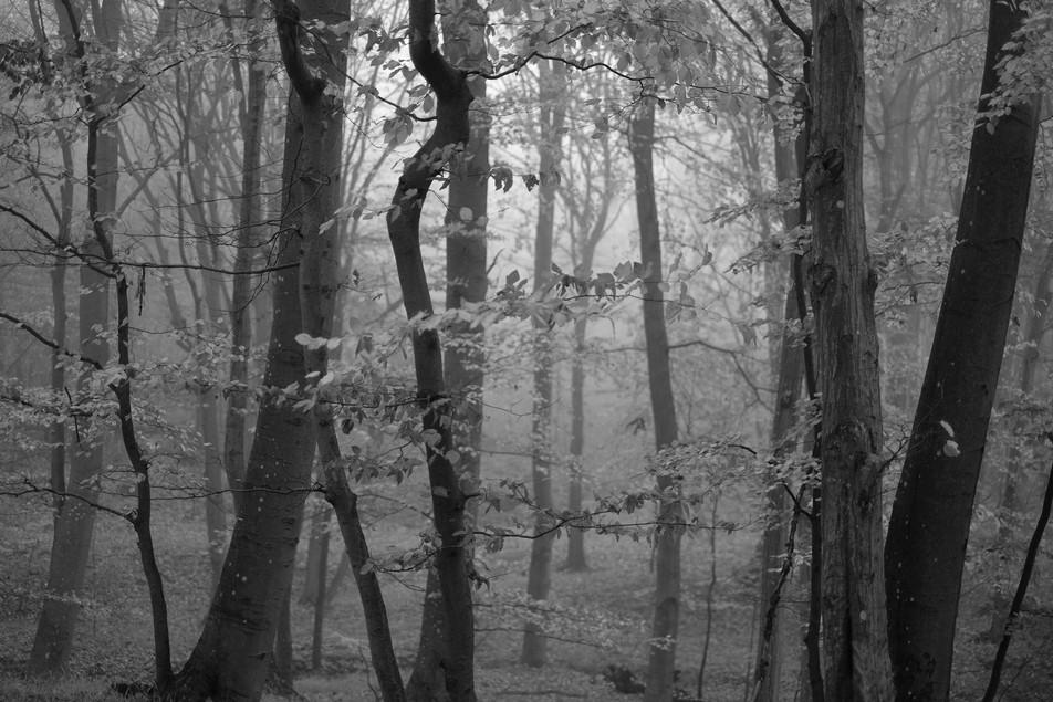 Tree to Light No. 02