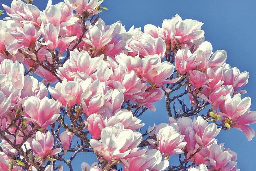 Baumblüten No. 20