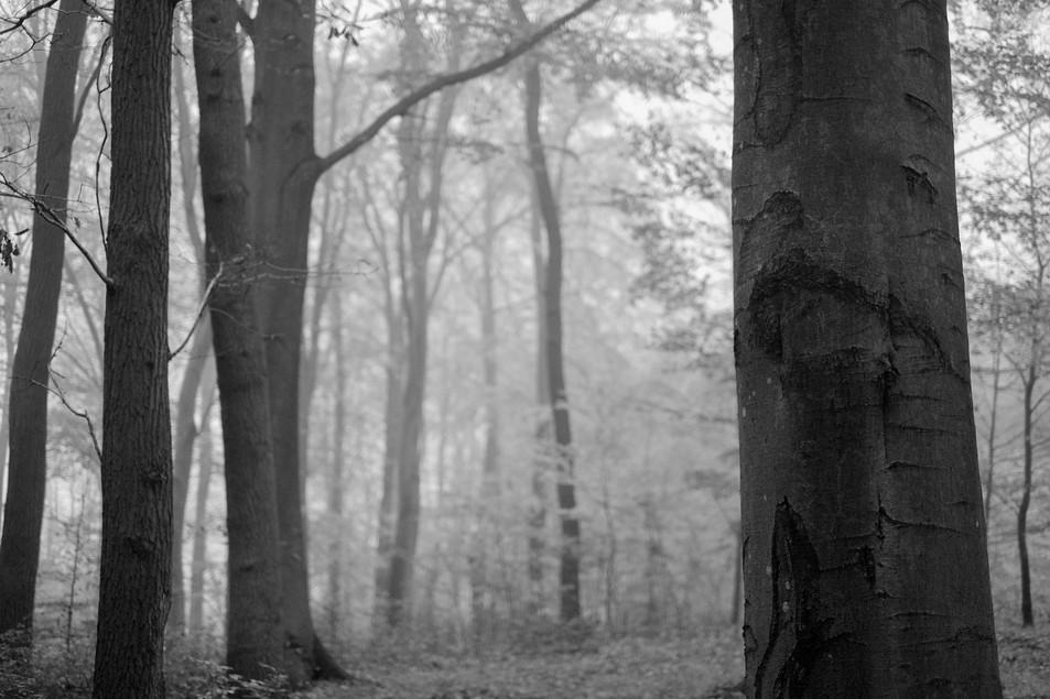 Tree to Light No. 03