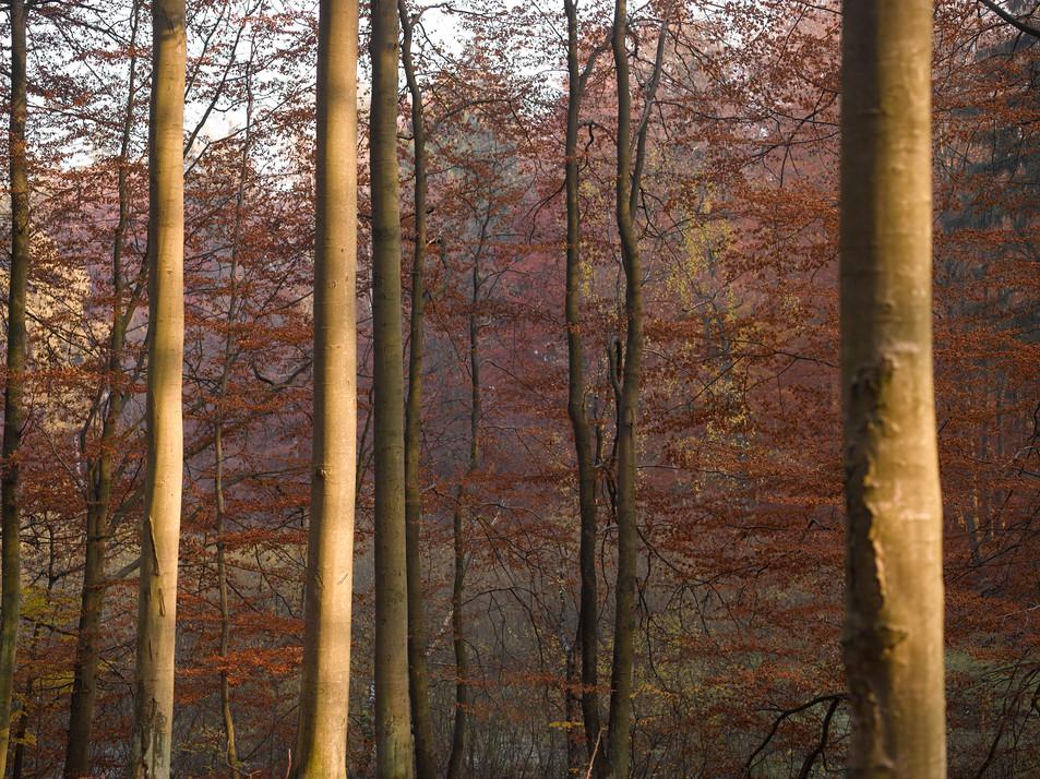 Herbstwald No. 04