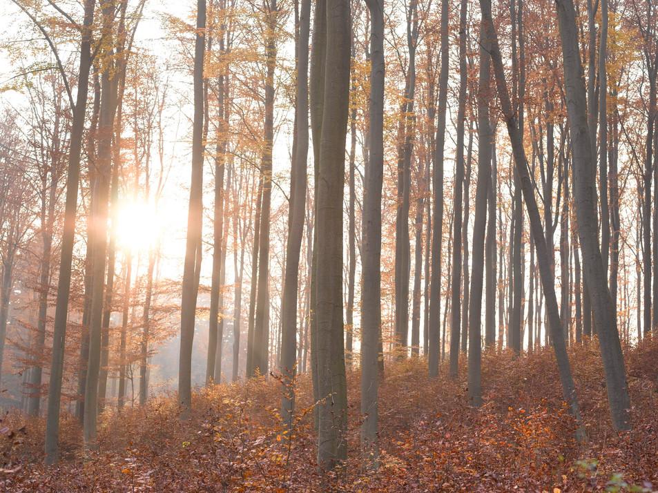 Herbstwald No. 09