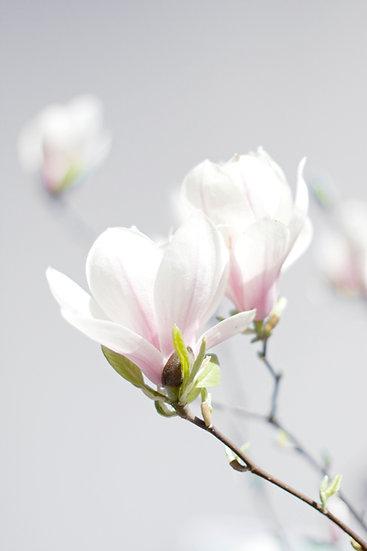 Baumblüten No. 11
