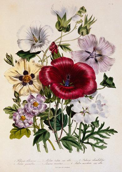 Blumen Illustration No. 14