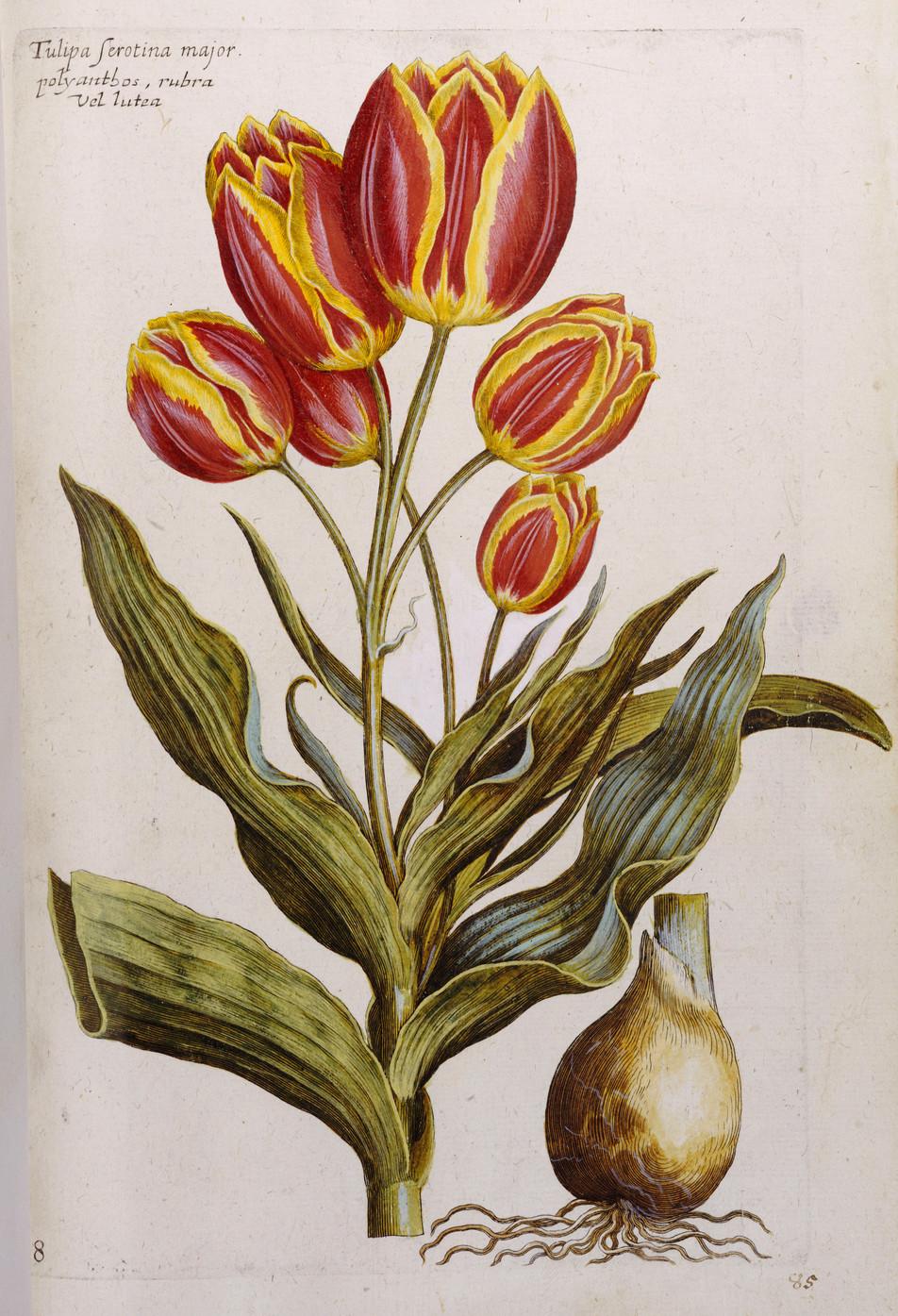 Blumen Illustration No. 07