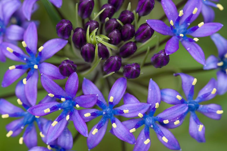 Flowers Blue No. 09