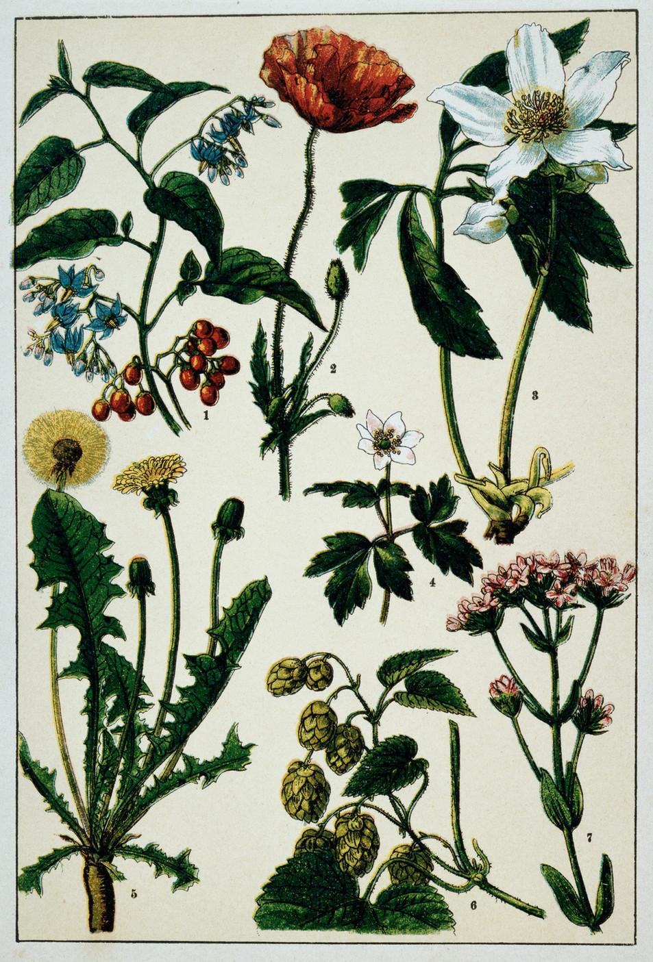 Blumen Illustration No. 06