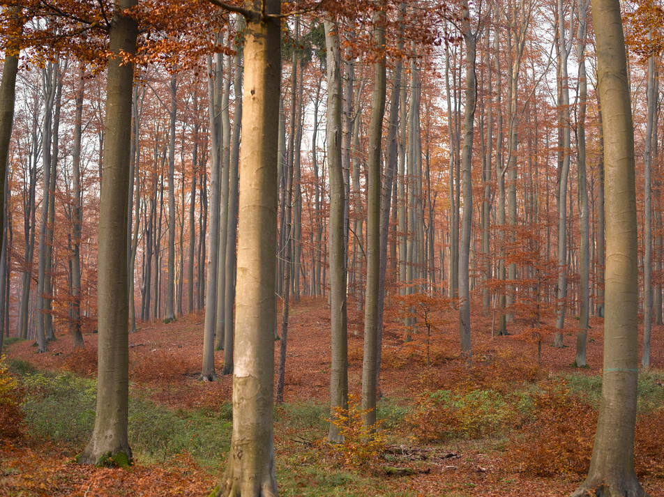 Herbstwald No. 03