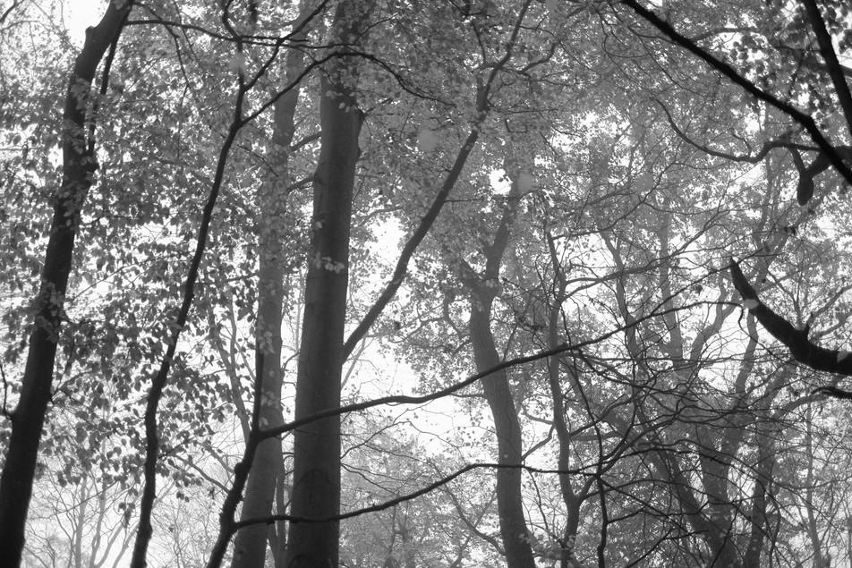 Tree to Light No. 12